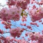 astenia primaveral, fatiga y agotamiento