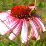 astenia primaveral, sensacion de fatiga y malestar